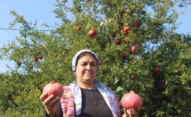 Manisa'da en fazla nar üretimi Salihli'de yapılıyor