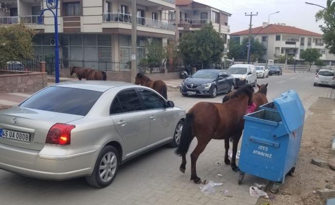 Manisa'da sokak hayvanlarına yılkı atları da eklendi