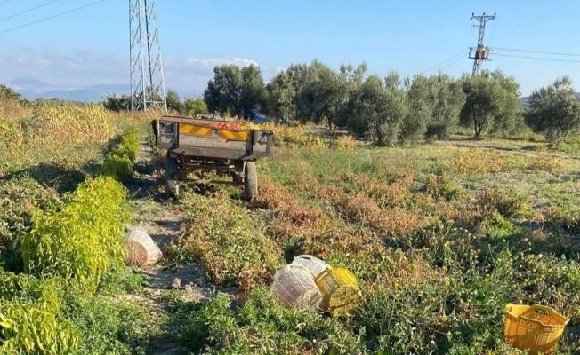 Traktörün altında kalan kadın hayatını kaybetti
