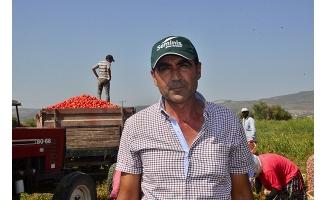 Salçalık domates 18 kuruşa düştü, çiftçi tepki gösterdi