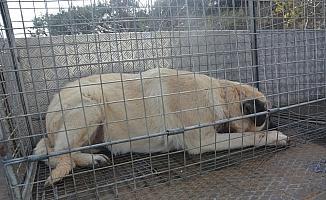 Ölmek üzere olan köpeğe Şehzadeler Belediyesi sahip çıktı