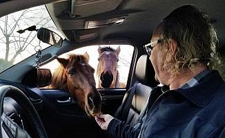 Yılkı atlarını 9 yıldır elleriyle besliyor