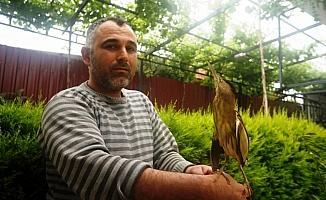 Nesli tükenme tehlikesindeki yaralı kuş tedavi altına alındı