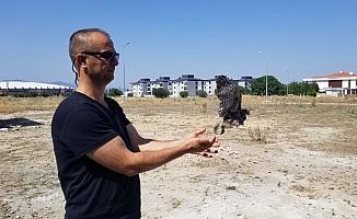 Yavru baykuş 2 ay sonra doğaya salındı