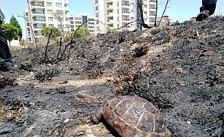Anız ve ot yangınlarında hayvanlar da zarar görüyor