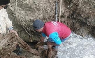 İçme suyu hattından 20 metrelik ağaç kökü çıktı