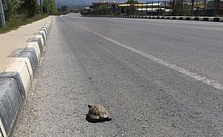Issız sokaklar kaplumbağaya kaldı