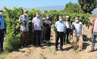 Türk mühendislerinden yüksek verimli üzüm