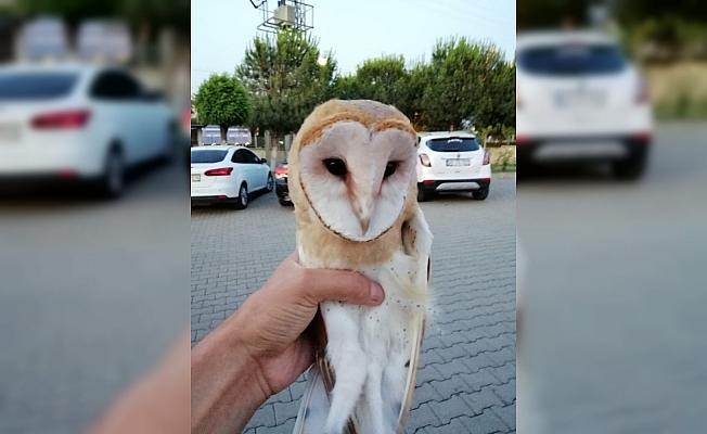 Yol kenarında bulunan baykuş koruma altına alındı