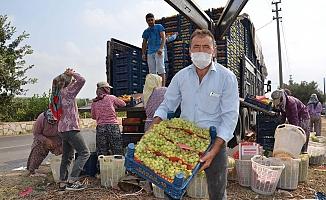 Dünyaca ünlü sultaniye üzümde ilk ihracat sevinci