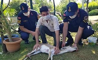 Manisa'da ilk kez görüldü yaralı halde bulundu