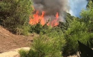 Manisa'daki orman yangını kısmen kontrol altında