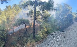 Uncubozköy'de orman yangını