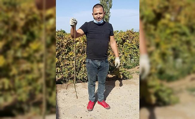 Evinden çıkan 1,5 metrelik yılanı öldürdü