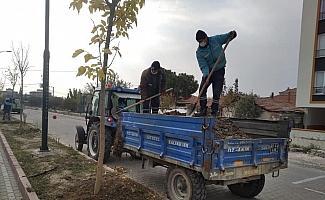 Akhisar Ring Yolu ağaçlandırılıyor