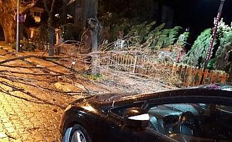 Manisa'da fırtına ağaçları devirdi çatıları uçurdu