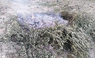 Orman yangını diye gittiler yakılan zeytin dallarıyla karşılaştılar