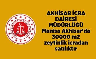 AKHİSAR İCRA DAİRESİ MÜDÜRLÜĞÜ Manisa Akhisar'da 30000 m2 zeytinlik icradan satılıktır
