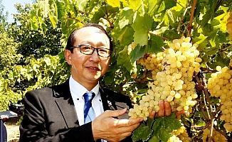 Japon Başkonsolos, Sarıgöl üzümlerine hayran kaldı