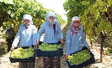 İhracatın ilk günü 54 tır üzüm gönderildi